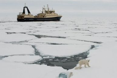 Polar Seafood trawler meet polar bear family in Greenland